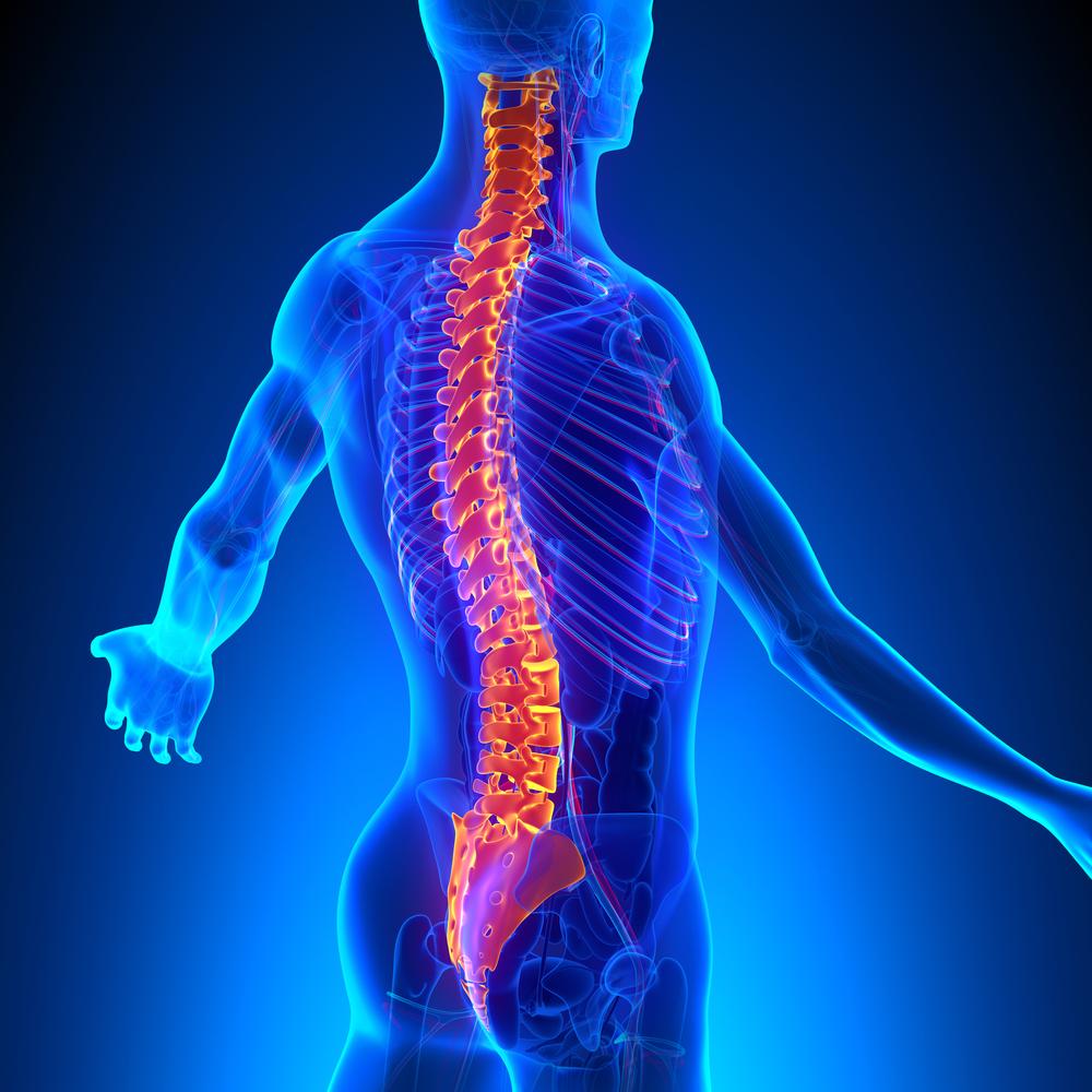 Spine model xray