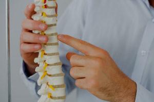 PTBO Chiro, Dr Doug explaining vertebrae