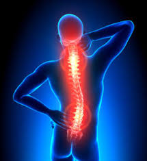 Xray model of spine